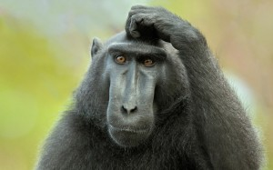 confused-monkey